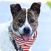 Adopt A Pet :: Cutie Bella-VIDEO - Woodland Hills, CA