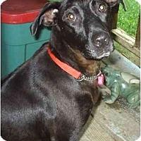 Adopt A Pet :: pearl - cedar grove, IN