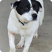 Adopt A Pet :: Dale - Prole, IA