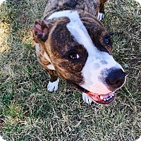 Adopt A Pet :: Taylor - grants pass, OR