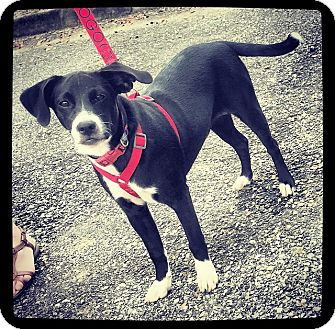 Terrier (Unknown Type, Small) Mix Puppy for adoption in Grand Bay, Alabama - Sybil
