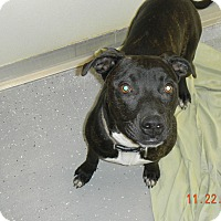 Adopt A Pet :: MOJO - Sandusky, OH