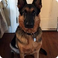 Adopt A Pet :: Buddy 2 - Detroit, MI