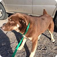 Adopt A Pet :: Big Foot pending adoption - Manchester, CT