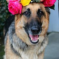 Adopt A Pet :: Lana - South El Monte, CA