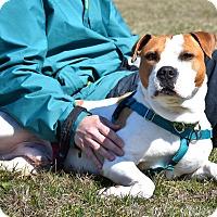 Adopt A Pet :: Barney - Reisterstown, MD
