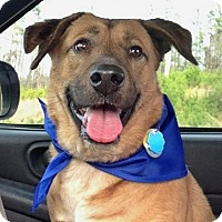 Adopt A Pet :: Rufus - Helena, AL