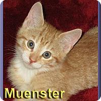Adopt A Pet :: Muenster - Aldie, VA
