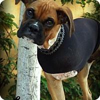 Adopt A Pet :: Lennox - Anaheim Hills, CA