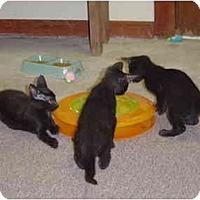 Adopt A Pet :: Benatar - Lake Charles, LA