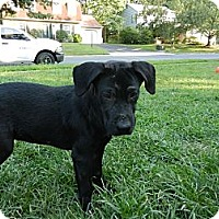 Adopt A Pet :: Izzy - South Jersey, NJ