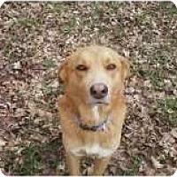 Adopt A Pet :: Gus - Staunton, VA