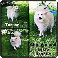 Adopt A Pet :: Tucson - Elmhurst, IL