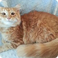 Adopt A Pet :: Sharna - Harrisburg, NC