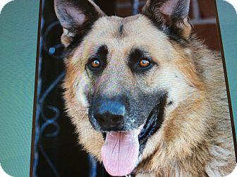German Shepherd Dog Mix Dog for adoption in Los Angeles, California - CHARLIE VON CORD