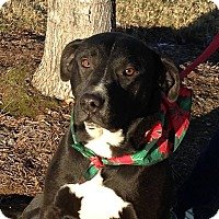 Adopt A Pet :: Emma - Rockmart, GA