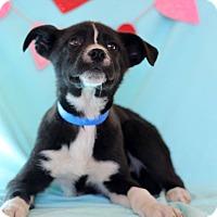 Adopt A Pet :: Lon - Waldorf, MD