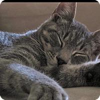 Adopt A Pet :: Ollie-FOSTER HOME NEEDED - Wayne, NJ