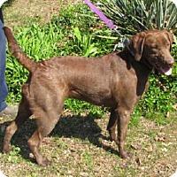 Adopt A Pet :: Mocha - Alstead, NH