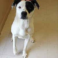 Adopt A Pet :: Boomer - Hagerstown, MD