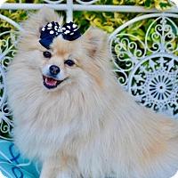 Adopt A Pet :: Puff - Irvine, CA