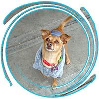 Adopt A Pet :: Esther - Las Vegas, NV