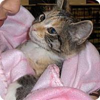 Adopt A Pet :: Peggy - Richmond, VA