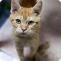 Adopt A Pet :: Garfield - Bluff city, TN
