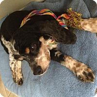 Adopt A Pet :: Lucy - Corona, CA