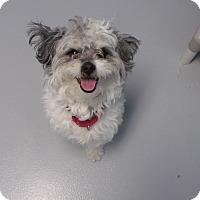 Adopt A Pet :: Scruffy - Muskegon, MI