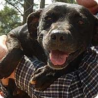 Adopt A Pet :: Honey - Athens, GA