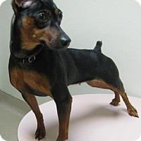 Adopt A Pet :: Pini - Gary, IN