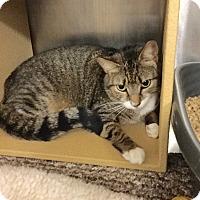 Adopt A Pet :: Pearl - Colmar, PA