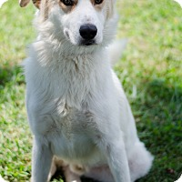 Adopt A Pet :: Casper - Arlington, TN