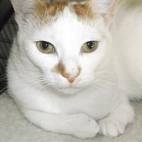 Adopt A Pet :: Hoppy - Farmington Hills, MI