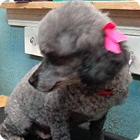 Adopt A Pet :: miranda - Crump, TN
