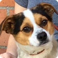 Adopt A Pet :: MATEO (video) - Los Angeles, CA