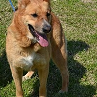Adopt A Pet :: Roma (Guest) - Roswell, GA