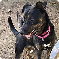 Adopt A Pet :: Kya - Paso Robles, CA