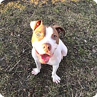 Adopt A Pet :: Phoenix - Eastpointe, MI