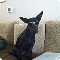 Adopt A Pet :: Ryder - courtesy post - Antioch, IL