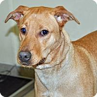 Adopt A Pet :: Bryce - Port Washington, NY