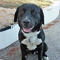 Adopt A Pet :: Malcolm - Malibu, CA