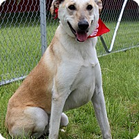 Adopt A Pet :: Kona - Waldorf, MD