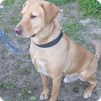 Adopt A Pet :: Noaln - West Hills, CA