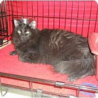 Adopt A Pet :: Missy - lake elsinore, CA