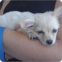 Adopt A Pet :: Priscilla - Lake Forest, CA