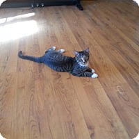 Adopt A Pet :: Jasper - Chesterfield, VA