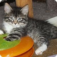 Adopt A Pet :: Jazzie - North Highlands, CA