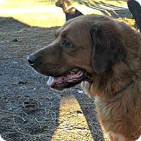Adopt A Pet :: Adam - Albemarle, NC